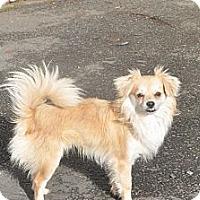 Adopt A Pet :: Brody - Tumwater, WA