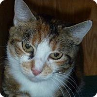 Adopt A Pet :: Saffron - Hamburg, NY
