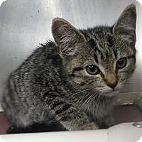 Adopt A Pet :: Sophia - Brockton, MA
