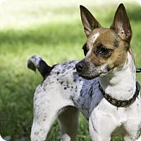 Adopt A Pet :: Twyla - San Francisco, CA