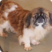 Adopt A Pet :: Ellie - Prole, IA