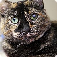 Adopt A Pet :: Venus Mascara - Chicago, IL
