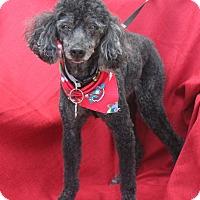 Adopt A Pet :: Chabbs - Umatilla, FL