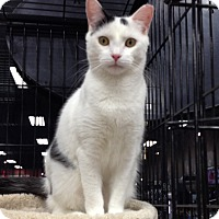 Adopt A Pet :: Lunar - Horsham, PA