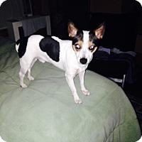 Adopt A Pet :: Spooky - North Brunswick, NJ