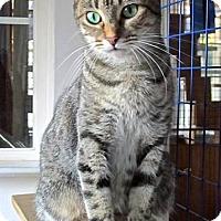 Adopt A Pet :: Kiya - Davis, CA