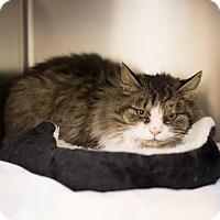 Adopt A Pet :: Morgana - Toronto, ON