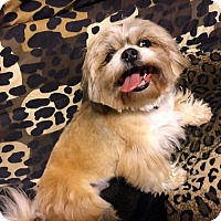 Adopt A Pet :: FRODO - Los Angeles, CA