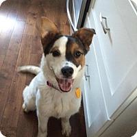 Adopt A Pet :: Cali - Saskatoon, SK