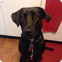 Adopt A Pet :: Maya - Barnegat, NJ