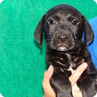Adopt A Pet :: Fizz - Oviedo, FL