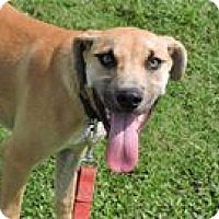 Labrador Retriever/Retriever (Unknown Type) Mix Dog for adoption in Cottonport, Louisiana - Lizzie