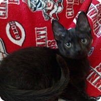 Adopt A Pet :: Jimmy Page - Middletown, OH