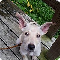 Adopt A Pet :: Cole - Adoption Pending! - Ascutney, VT