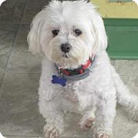 Adopt A Pet :: Bentley - Suffolk, VA