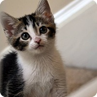 Adopt A Pet :: Marie - MUST See Video - Buford, GA