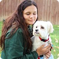 Adopt A Pet :: Kirby - Elyria, OH