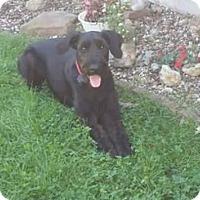 Adopt A Pet :: Marshall - Springfield, MO