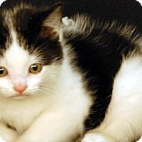 Adopt A Pet :: Sharky - Newland, NC
