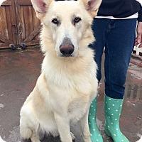 Adopt A Pet :: Hunter (BH) - Santa Ana, CA