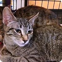 Adopt A Pet :: Freddie - Fischer, TX