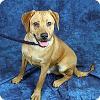 Adopt A Pet :: Saber - Joliet, IL