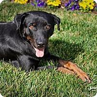 Adopt A Pet :: London - Marietta, GA