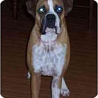 Adopt A Pet :: Goober - Thomasville, GA
