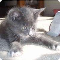 Adopt A Pet :: Delaney - Davis, CA