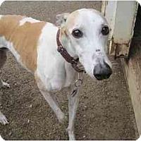 Adopt A Pet :: Jimbo (Jimbo Mattox) - Chagrin Falls, OH
