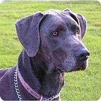 Adopt A Pet :: Cahoon - Rigaud, QC