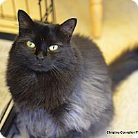 Adopt A Pet :: Nellie - Island Park, NY