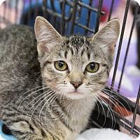 Adopt A Pet :: Jessica - Redondo Beach, CA