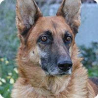 Adopt A Pet :: King-Sr - Nashville, TN