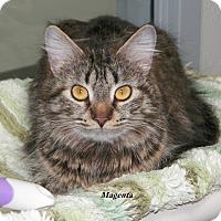 Adopt A Pet :: Magenta - Dover, OH