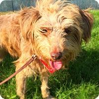 Adopt A Pet :: Hershey - Green Bay, WI