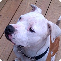 Adopt A Pet :: Jewels - Kimberton, PA