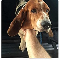 Adopt A Pet :: Cason - Marietta, GA