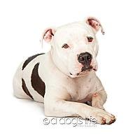 Adopt A Pet :: Doris - Scottsdale, AZ