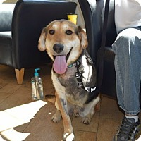 Adopt A Pet :: Tucker - tripod - Sparta, NJ