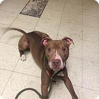 Adopt A Pet :: Mack - Cleveland, OH
