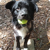 Adopt A Pet :: Harry - Alpharetta, GA