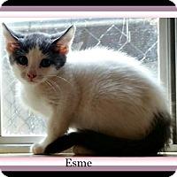 Adopt A Pet :: Esme - Tombstone, AZ