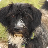 Adopt A Pet :: Lucky - Oxford, MS