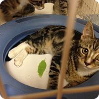 Adopt A Pet :: Lil - Carrollton, VA