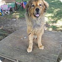 Adopt A Pet :: Diesel - Chambersburg, PA