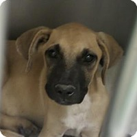 Adopt A Pet :: HANSEL - Cleveland, MS