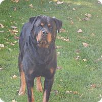 Adopt A Pet :: Rex - Keswick, ON