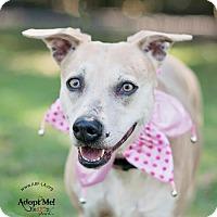 Adopt A Pet :: Cookie - Lafayette, LA