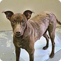 Adopt A Pet :: Neenon - Shreveport, LA